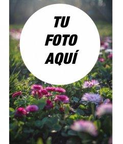 Collage de fotos circular sobre campo de flores y pasto al sol