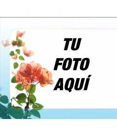 Marco para fotografías digitales para hacer con tu foto. Hay una planta verde que simula pétalos con hojas de tonalidad roja anaranjada