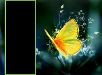 Fondo de pantalla para dos fotos con una mariposa amarilla posada en una flor