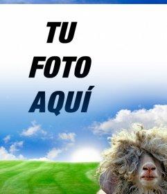 Fotomontaje con una oveja y un prado verde de fondo