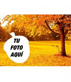 Árboles de otoño dorados con marco de foto en forma de bellota