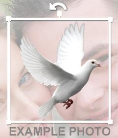 Paloma blanca volando para editar en tus fotos