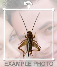 Insecto con antenas y patas largas para aplicar en tus fotografías