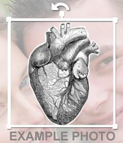 Pegatina con tatuaje de corazón humano en blanco y negro
