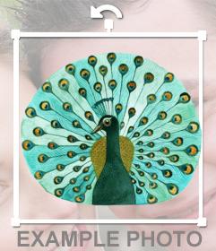 Pegatina de un pavo real de color verde