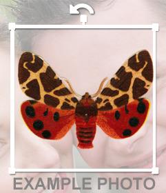 Pega una polilla estilosa en tus imágenes con este sticker online