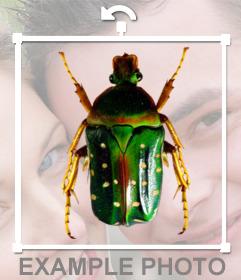 Bicho verde en sticker para poner sobre tus fotos