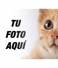 Añade este gatito rubio a tus fotos y personalizarlas con texto gratis online