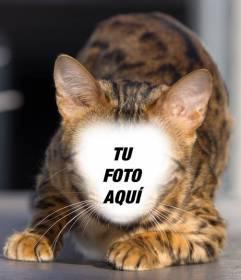 Fotomontaje de un gato montes para poner tu cara y convertirte en un híbrido felino