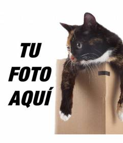 Fotomontaje para poner una gatita en una caja en una de tus fotografías