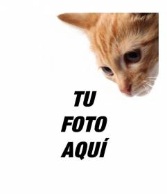 Añade un gatito a tus fotos y personalizarlas también con un texto de manera fácil