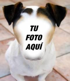 Fotomontaje de un perro en el que colocar tu cara y gratis