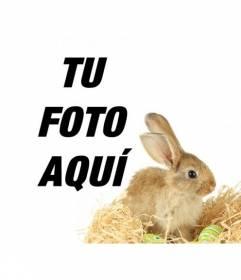 Fotomontaje con un conejo y huevos de pascua para agregar a tus fotografías online y gratis