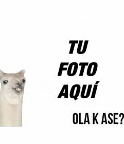 Crea un fotomontaje fácil con la llama del meme *Ola k ase? y añade texto online gratis