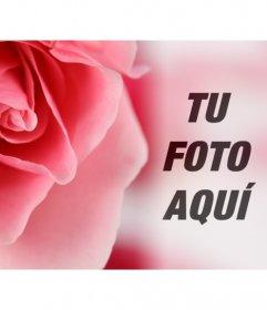 Fotomontaje romántico con una gran rosa rosada y fondo difuminado donde superponer una foto tuya o de tu pareja
