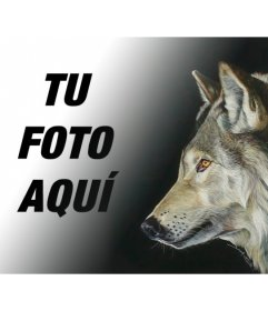Fotomontaje con una foto de un lobo para hacer collages con tus propias imágenes y frases