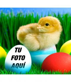 Pon tu foto en este huevo de Pascua de color azul