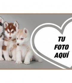 Personaliza tu portada de perfil de Facebook con tu foto y cachorros husky