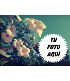 Foto collage de primavera con flores campanilla en el campo