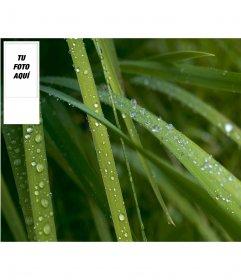 Fondo para twitter con hierba húmeda de fondo, personalizable con tu foto