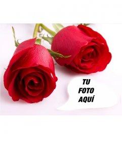 Postal de amor con dos rosas y un marco de fotos en el que poner una imagen