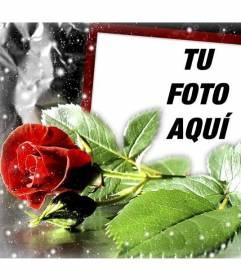 Postal para enamorados con una rosa en la que puedes poner tu foto