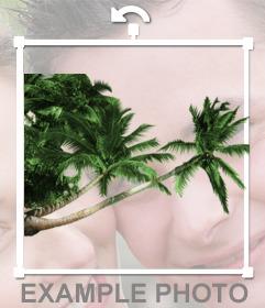 Sticker de palmeras de la playa para poner en tus fotos y hacer un efecto como que estás de vacaciones