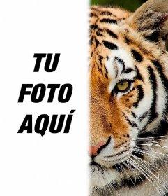 Fotomontaje para tener la mitad de la cara como un tigre