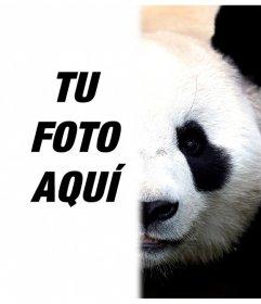 Transforma la mitad de tu cara en panda editándola con tu foto
