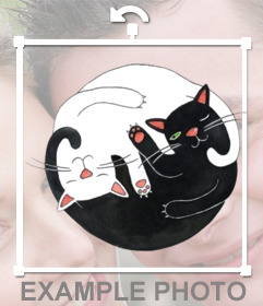 Pegatina de dos gatos abrazados