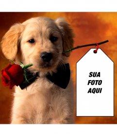 Fotomontagem com um filhote de cachorro para colocar sua foto em um cartão de posse do filhote de cachorro