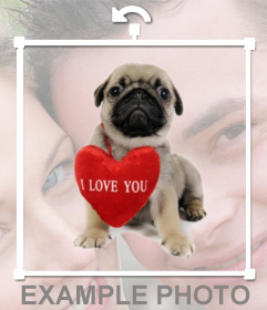 Efeito da foto de um filhote de cachorro com um coração para adicionar as suas fotos para