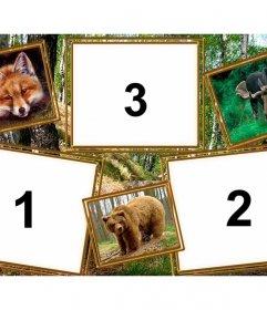 Colagem de animais para editar com três fotos de si mesmo