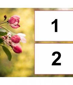 Colagem de duas fotos com tulipas primavera rosa em flor