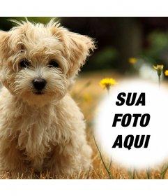 Efeito da foto com um filhote de cachorro bonito onde você pode adicionar sua foto gratuitamente