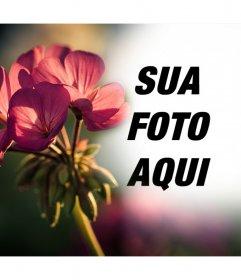 Efeito de foto livre para as suas fotos com um filtro de uma flor
