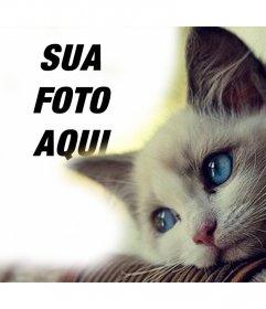 Efeito com um gato bonito dos azul-olhos para adicionar sua foto
