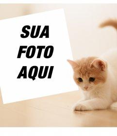 Efeito da foto com um gatinho bonito para fazer upload de sua foto favorita