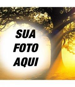 Editar esta colagem da foto de um por do sol com uma árvore acima de sua foto livre efeito Foto
