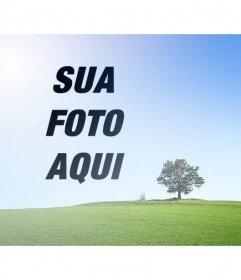 Colagem com uma foto de uma paisagem com um campo verde e céu azul para colocar uma foto ao lado de uma árvore