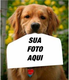 Fotomontagem com um cachorro segurando uma fotografia com o nariz de uma forma engraçada. Este golden retriever