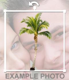 Coloque a palma da mão em suas fotos e cria um efeito que você está em uma praia do Caribe