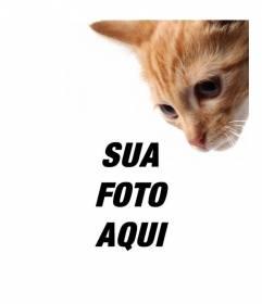 Adicionar um gatinho para suas fotos e também também personalizá-los facilmente