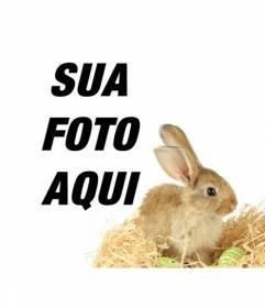 Fotomontagem com um coelho e ovos de páscoa para adicionar às suas fotos online e gratuito