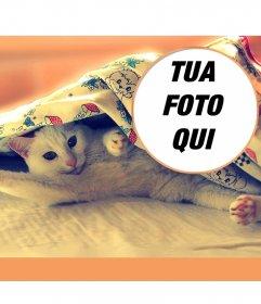 Collage con un gatto che si estende su un letto, che dà il buongiorno con le gambe