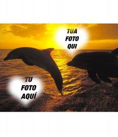 Collage per due foto a forma di cuore e delfini che saltano
