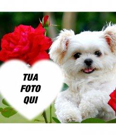 Effetto libero di amore con un cucciolo carino e fiori rossi per aggiungere la foto