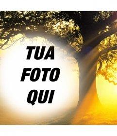 Modifica questo collage di foto di un tramonto con un albero la vostra foto gratis effetto Foto