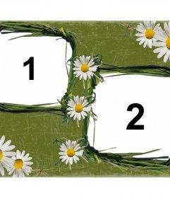Daisies decorare questa cornice per le foto on-line che possono mettere due dei vostri FOTS con il nostro editor online di