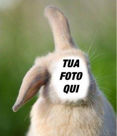 Fotomontaggio in linea con la tua faccia sul corpo di un coniglio